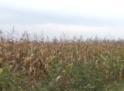 Увеличаването на осигурителните прагове затруднява земеделците