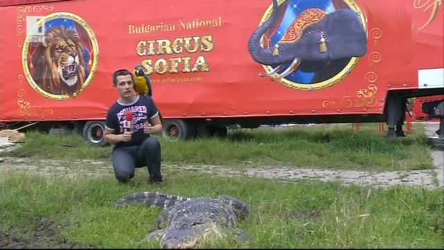 Възраждане на цирка у нас