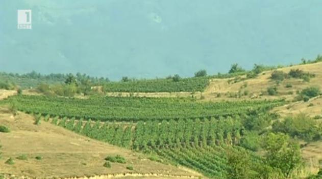 Българо-македонски проект за винопроизводство