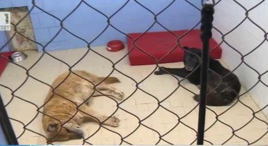 Ще бъде ли закрит приютът за кучета в квартал Надежда?