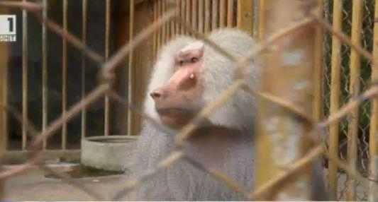 Шуменският зоопарк без лиценз