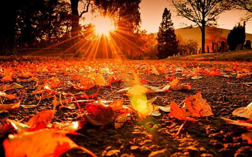 В началото на есента - нащрек срещу алергиите