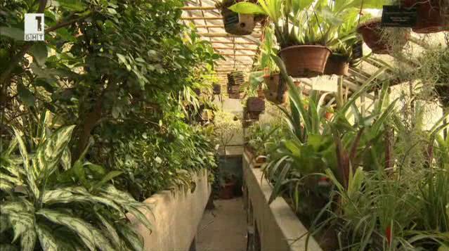 Разказ за така модерното напоследък градско градинарство