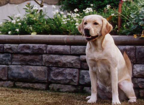Симфония за любители на кучета