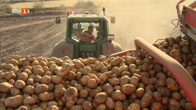 Каква беше годината за българския картоф
