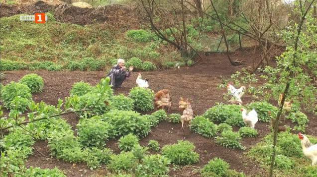 За щастливите кокошки и великденските яйца