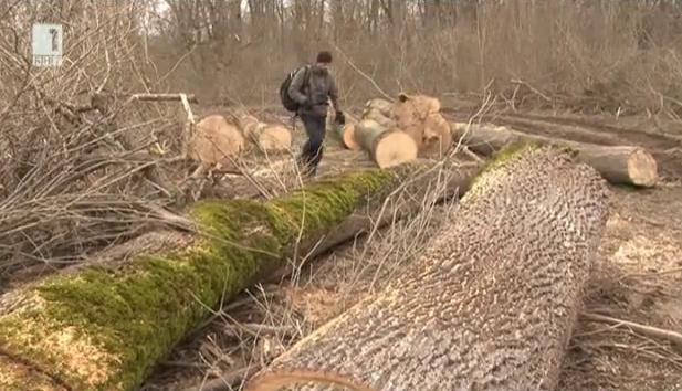 За хората, които обичат гората, и хората с резачките