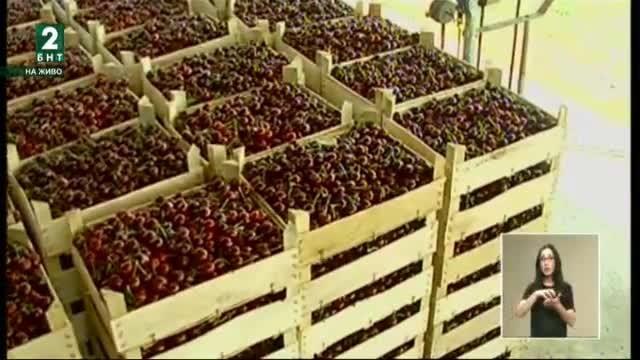 Какви са проблемите на овощарите в Северна България
