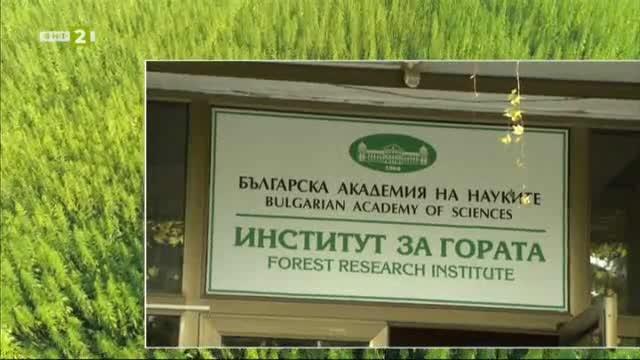 Учени търсят антидот на дървесна гъба, която убива кестеновите дървета
