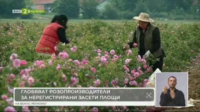 Какво следва след приемането на Закона за розата