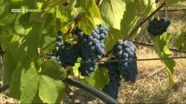 Перспективи пред лозаро-винарския отрасъл в Югозападна България