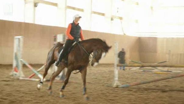 Конят, наш приятел и помощник