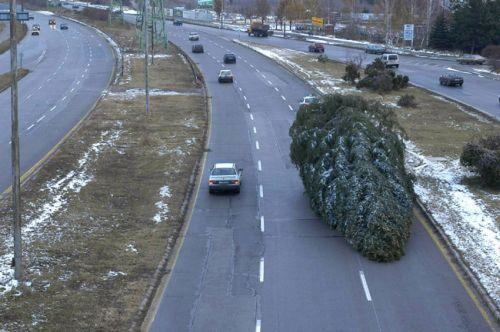 Обърната елха