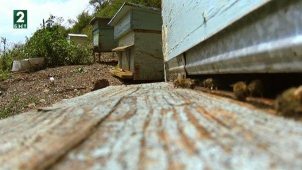 снимка 1 Съвременници: Окото на пчелата