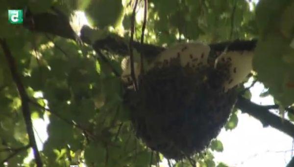снимка 5 Съвременници: Окото на пчелата