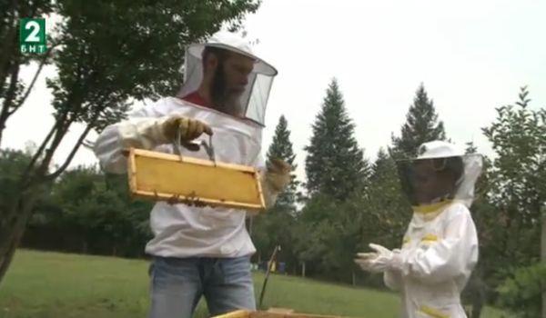 Съвременници: Окото на пчелата