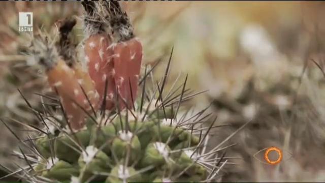 Най-голямата колекция от кактуси в България