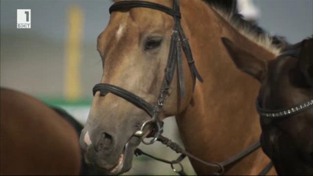 Легендата Ахал Теке - небесните коне от Туркменистан