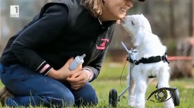 Да ти кажа честно: Животни в инвалидни колички