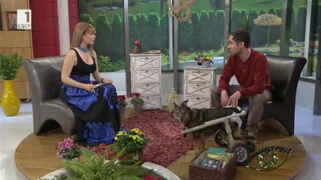 История на Николай Чолаков и кученцето Мими, което се движи на четири гуми