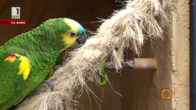 Канарските острови и една от най-колоритните зоологически градини в света