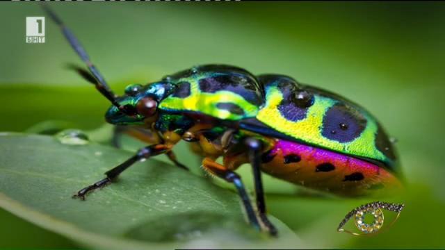 """В """"Дневникът на Червенокосата"""" - най-симпатичните насекоми в света"""