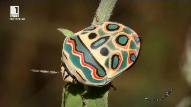 Най-симпатичните насекоми в света (повторение)