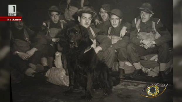 Кучета герои