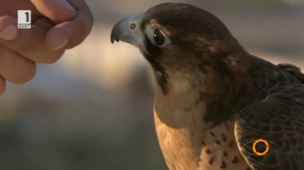 Етология - наука за поведението на животните