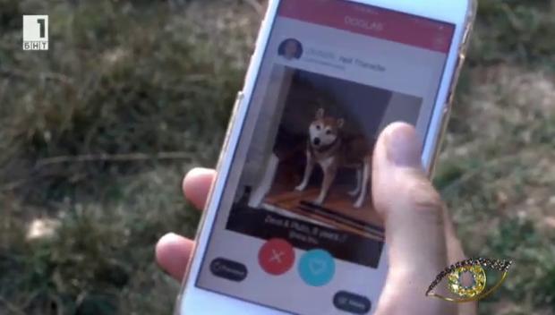 Социална мрежа дава отговори на въпроси, свързани с отглеждането на кучета