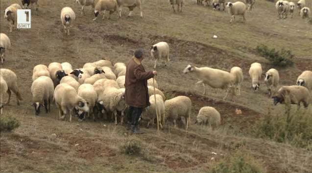 """Очерк за една """"щастлива"""" ферма в Садово"""