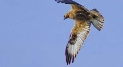 Птиците в България
