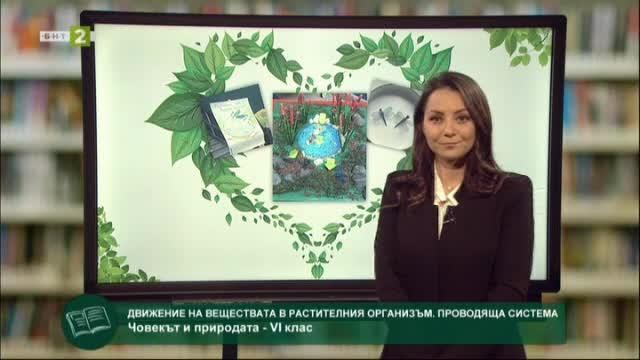 Човекът и природата 6.клас: Движение на вещества в растителния организъм