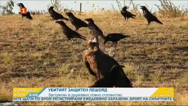 Единственият у нас черен лешояд загина от бракониериерска стрелба