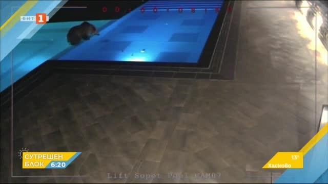 Търсят мечето от басейна в Сопот