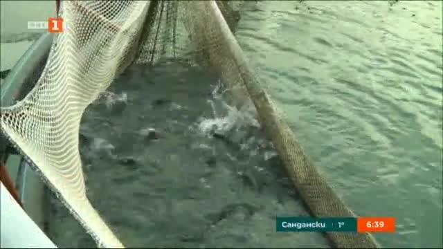 Как да разпознаем прясната риба?