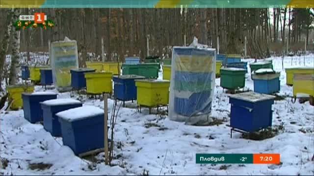Пчеларите протестират с искания за държавно подпомагане на сектора
