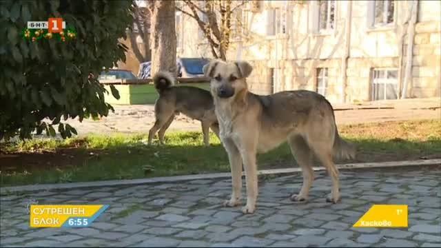 Бездомни кучета тормозят хората в Исперих