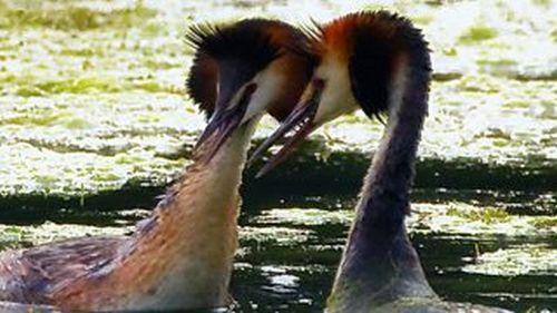 Тайният живот на птиците