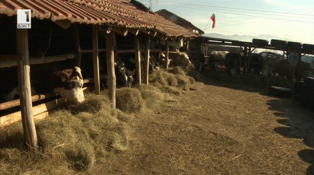 Един фермер с малко стопанство и големи мечти