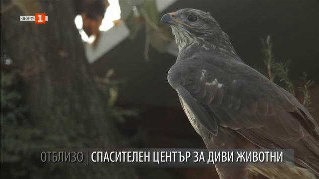 Спасителният център за диви животни в Стара Загора
