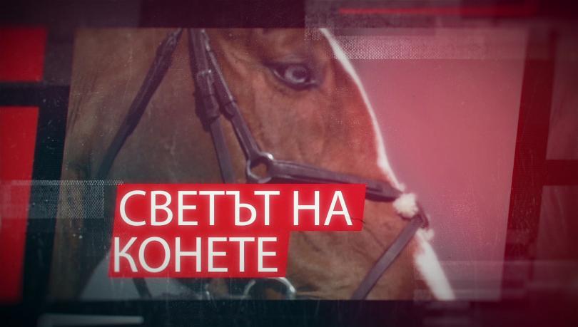Светът на конете