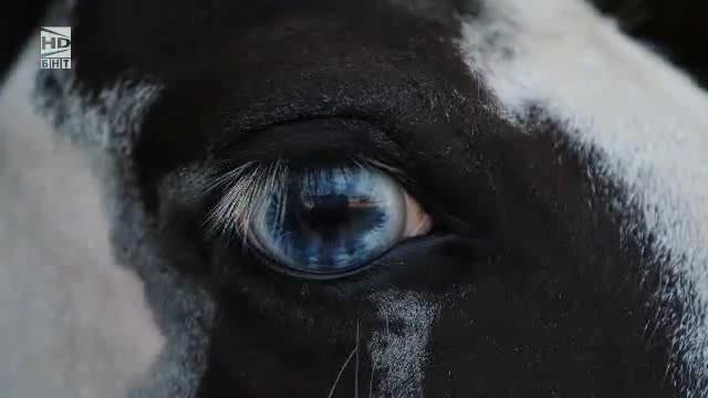 Светът на конете - 28.07.2018