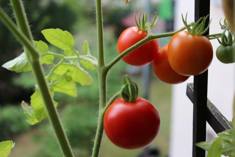 Избрано от 100% будни: Зеленчукова градина на балкона