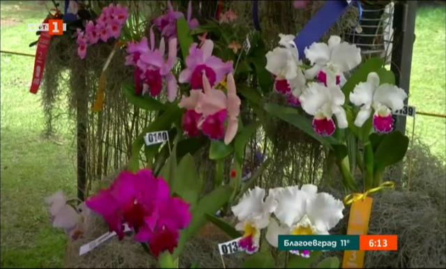 Изложба на орхидеи в колумбийската столица Богота