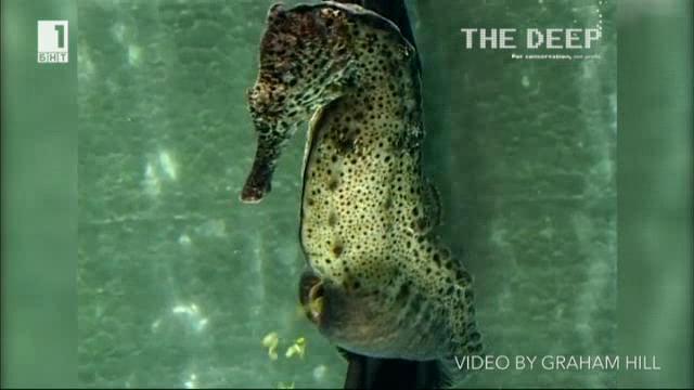 Виж какво ти нося: Любопитни факти за морското конче