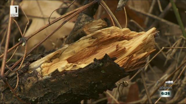 Вандалско изсичане на дървета и замърсяване в Южния парк
