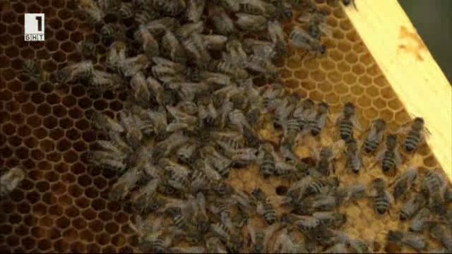 Промишленото пчеларство в България