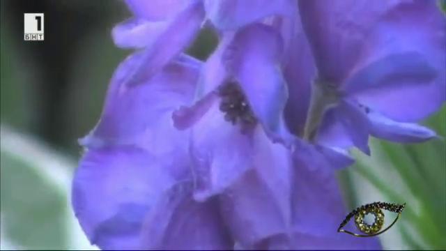 Най-отровните цветя
