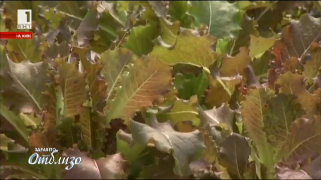 Бъдещето на екологичното фермерство